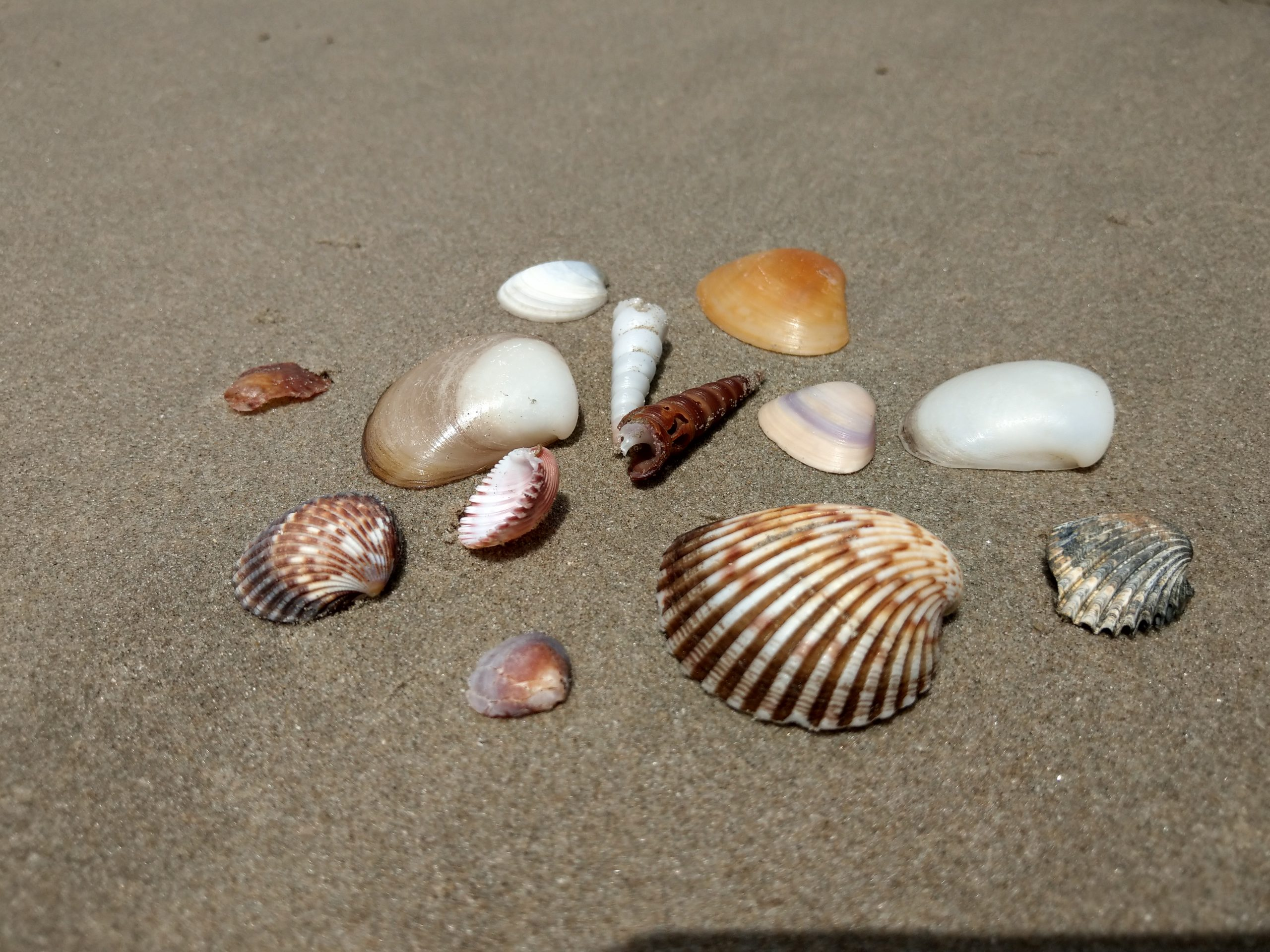 shells at Paradise Beach